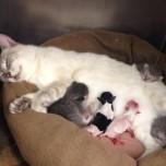 گربه مادر وفرزندانش