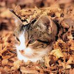 گربه ای سنگر گرفته در برگهای خشک