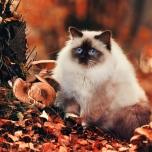 گربه در یکروز پائیزی